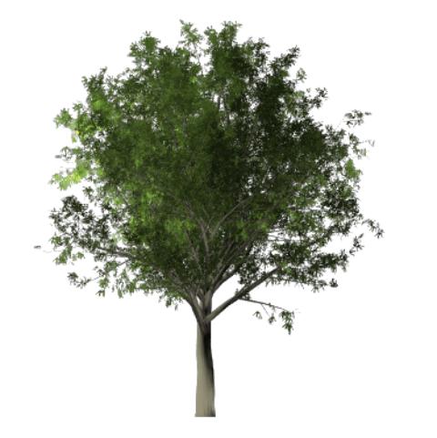 【最新版】Photoshopで世界にひとつだけの木を描画する超便利な機能について解説します